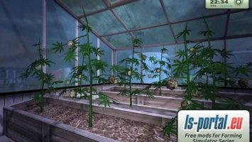 Greenhouse with hemp