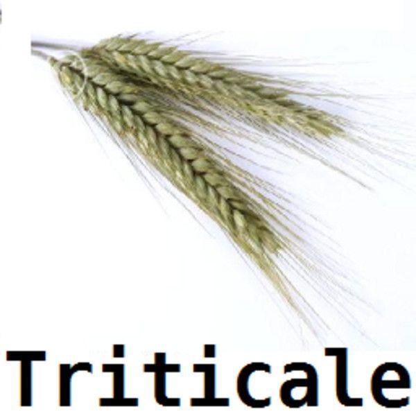 triticale ls2013 mod mod for farming simulator 2013 ls portal
