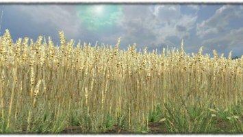 Wheat texture v2