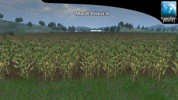 Forgotten Plants Maize