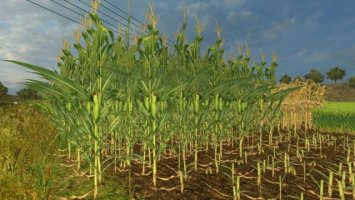 Real Maize Texture HD