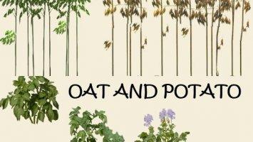 Texture oat and potato