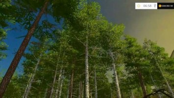 Birch Trees Felling with Harvester
