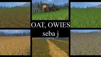 Tekstura owsa v2 ls15