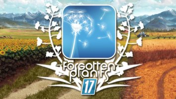 Forgotten Plants - Rzepak