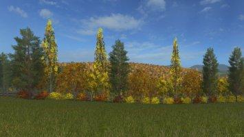 Autumn Trees FS17