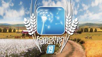 Forgotten Plants - Wheat / Barley