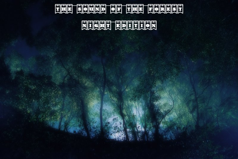 The Sound of the Forest (Night Edition) FS19