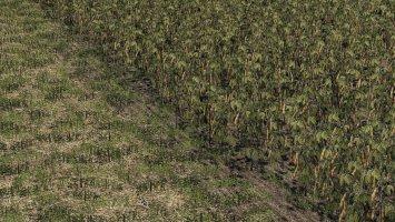 Oat - Soybean - Oilseed radish - Sugar Beet fs19