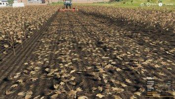 Mowable Cotton Stalks