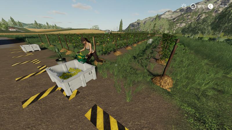Vineyard FS19