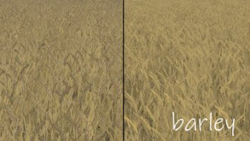 Wheat - Barley Texture fs19