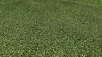 Texture of straw, hay, grass fs19
